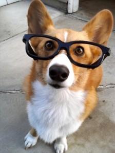Genius dog