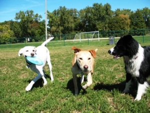 St louis dog parks