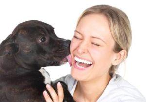 dog licking human