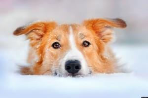 dog in winter